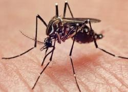 Serviços Públicos e Vigilância em Saúde realizam mobilizações sociais contra a dengue